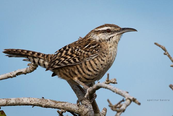 Al menos 7 especies de aves endémicas peligran en Yucatán