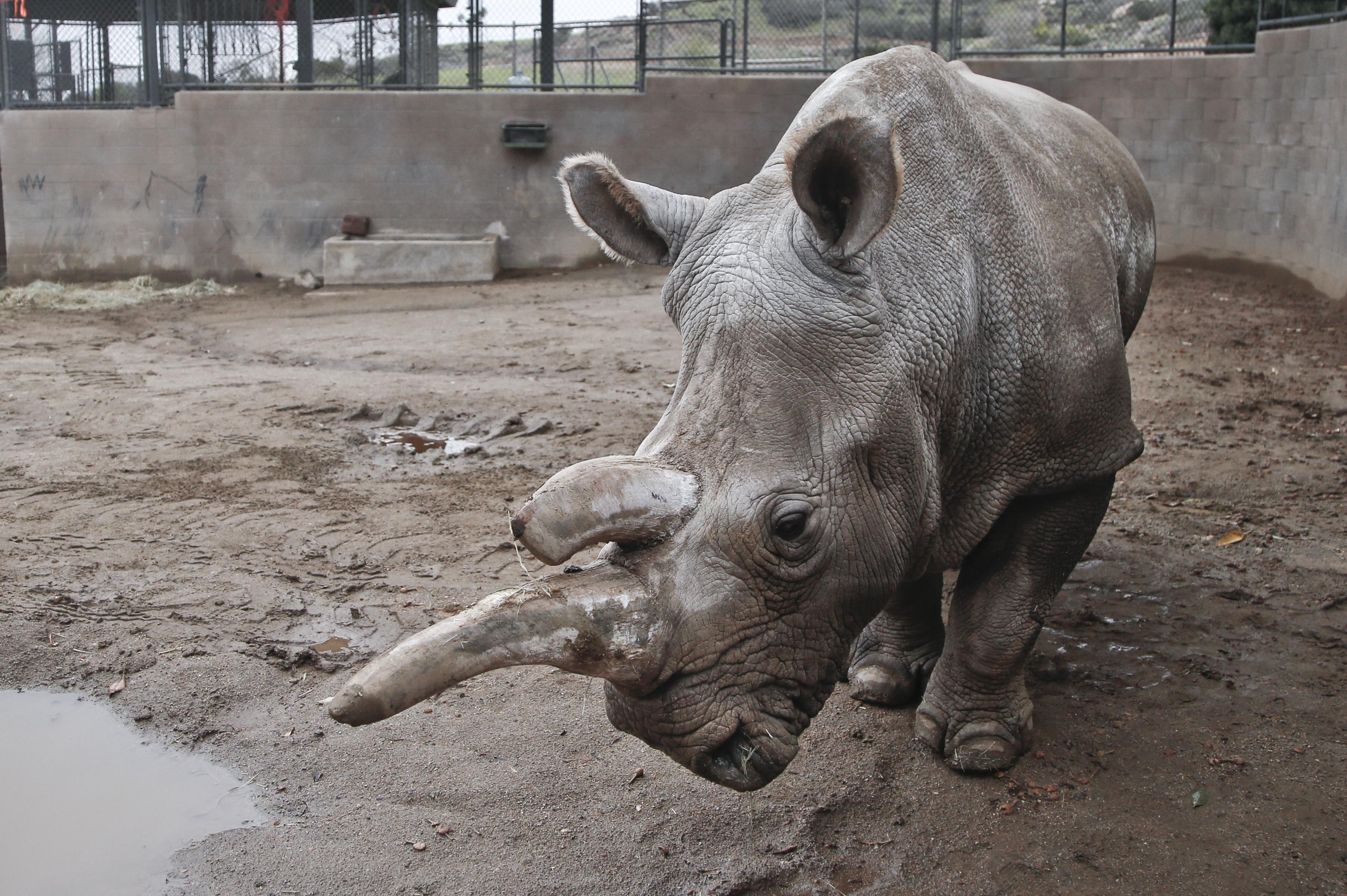 informacion de animales en peligro de extincion – animalesextintos11