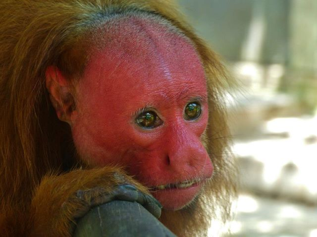 Lista Y Fotos De Los Siete Animales Más Feos Y Raros Del Mundo