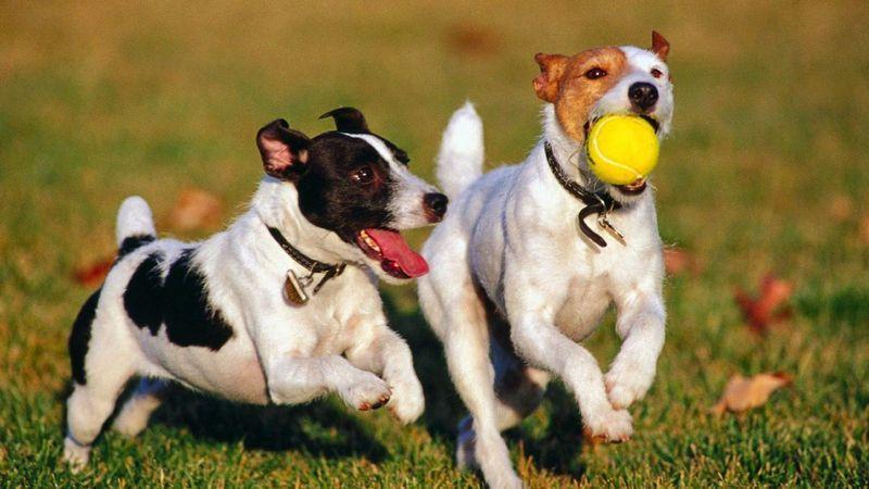 Mascotas 39 dan clases 39 de responsabilidad novedades - Novedades para mascotas ...